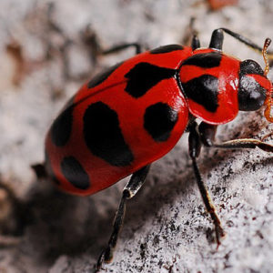 What Do Beetles Eat? Learn How The Beetle Types Feed