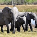 What Do Elephants Eat? See The Foods Of An Elephant