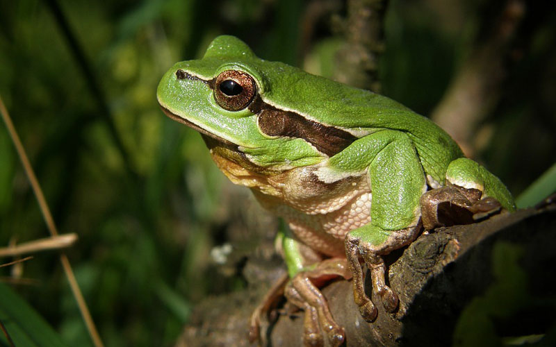 What Do Frogs Eat? Feeding Your Pet Frog
