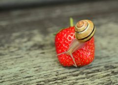 What Do Snails Eat? Learn About The Preferred Foods Of A Snail
