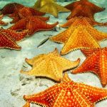 What Do Starfish Eat? The Diet Of The Amazing Sea Stars