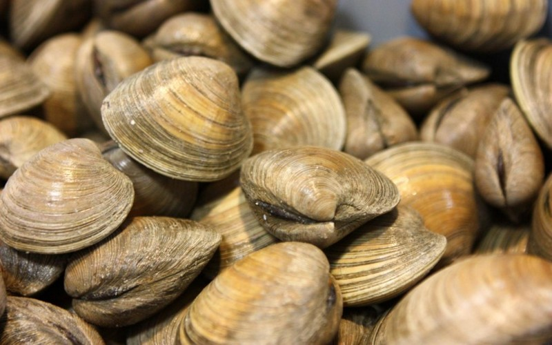What Do Clams Eat?