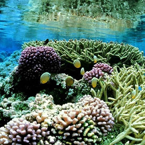 What Does Coral Eat?