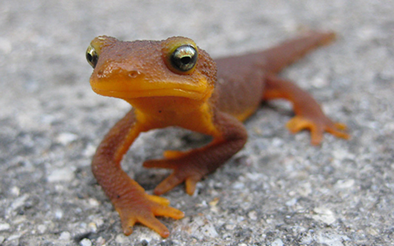 What Do Newts Eat?