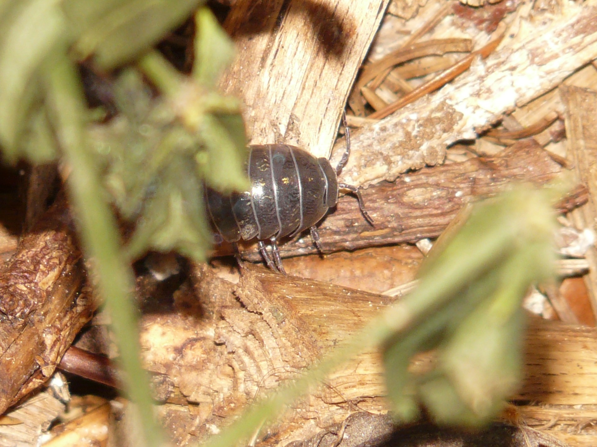 What Do Woodlice Eat?