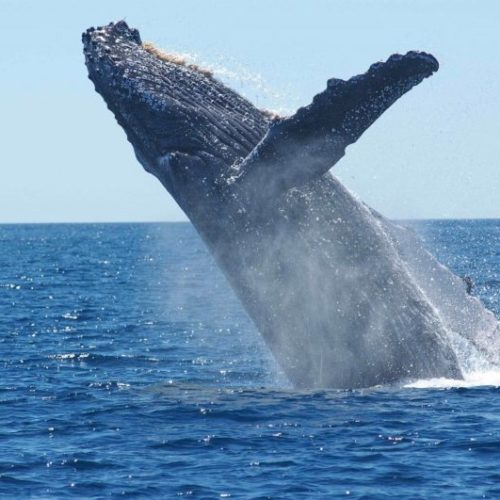 What Do Humpback Whales Eat?