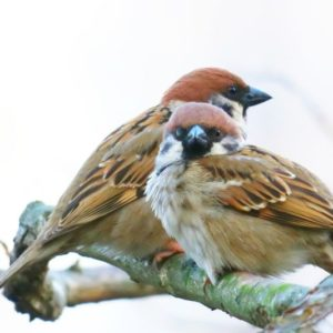 What Do Sparrows Eat?