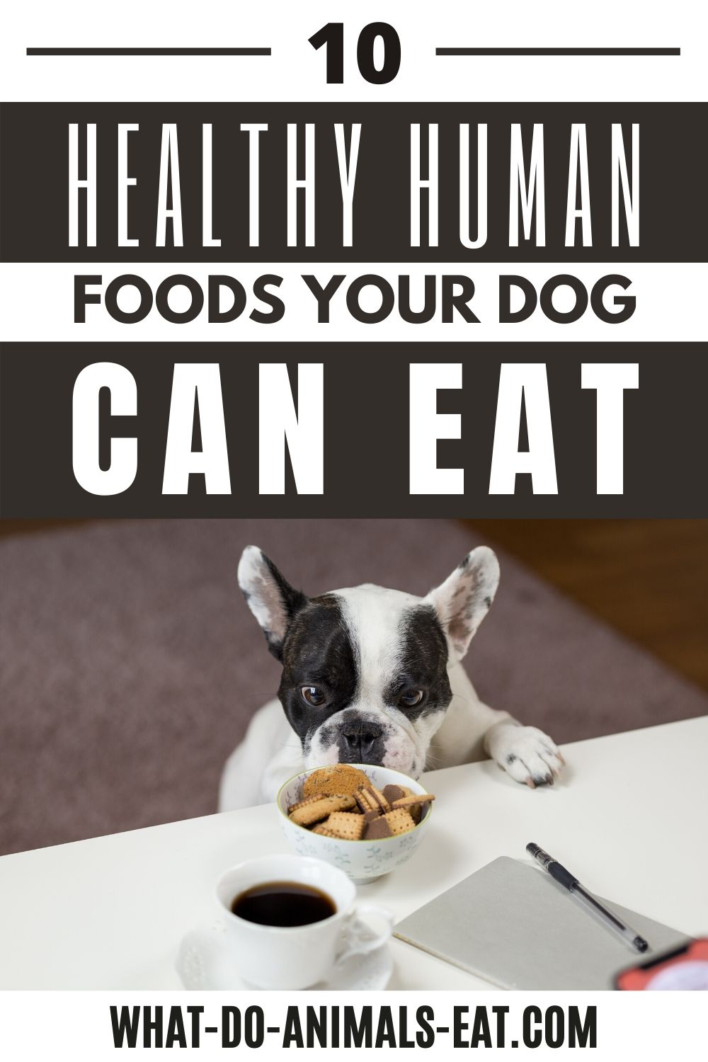 What Human Foods Can A Dog Eat