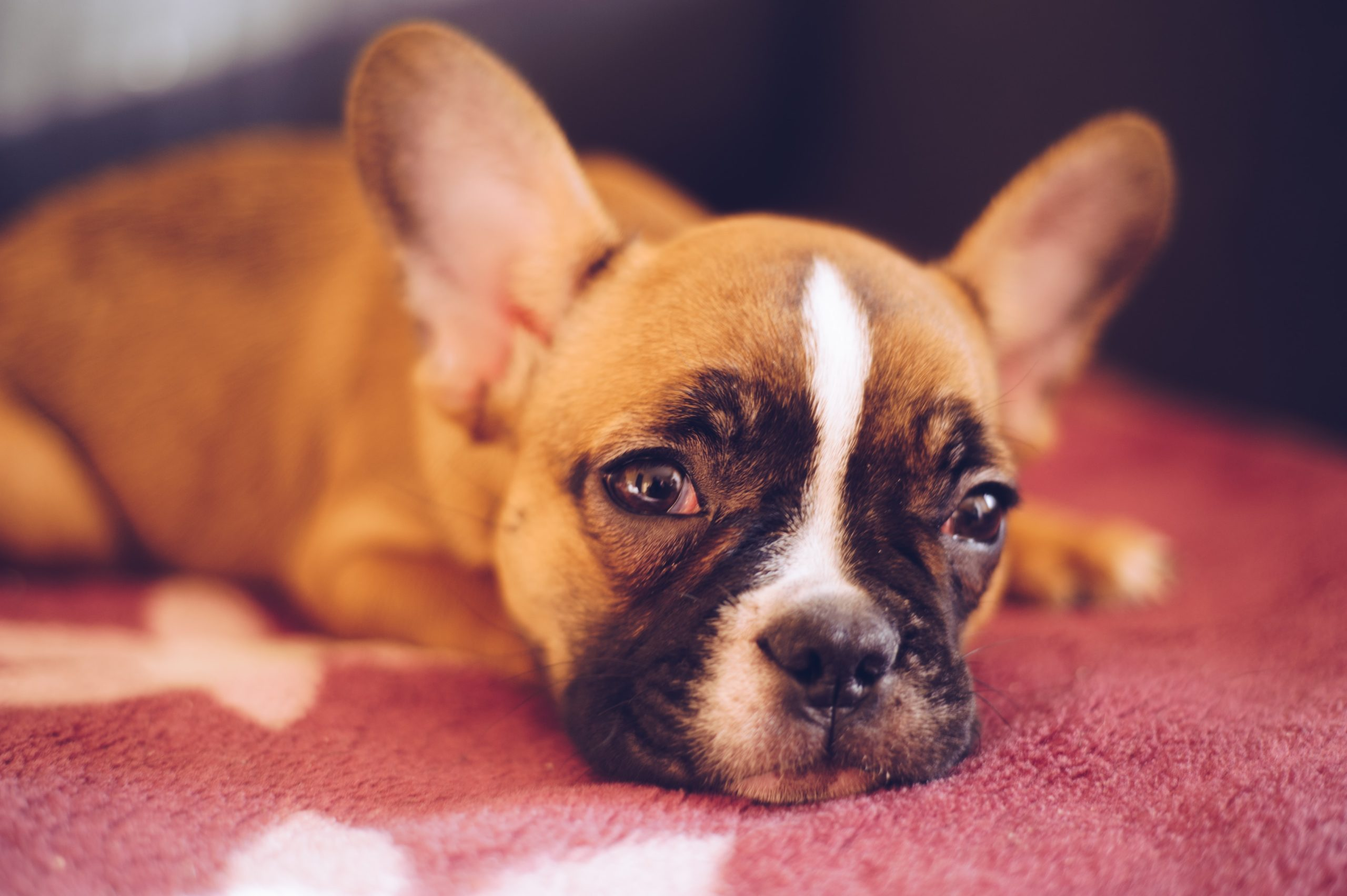 How Long Does It Take To Potty Train A Dog?