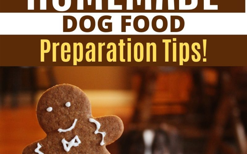 How To Make A Homemade Dog Food