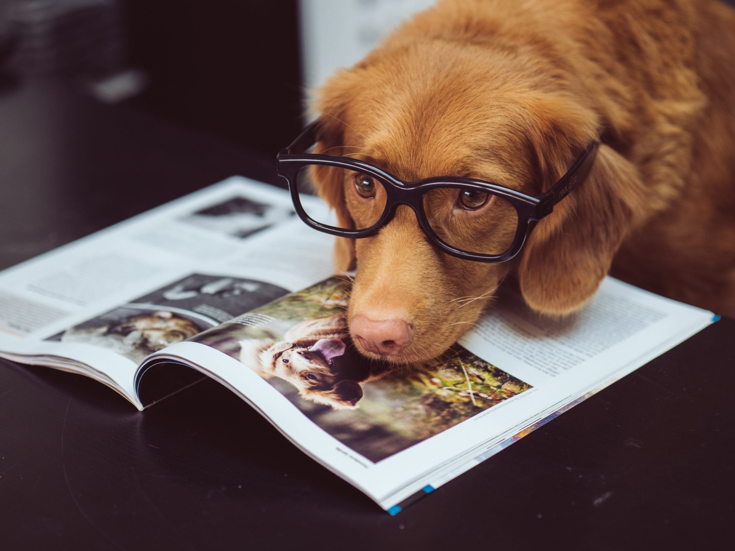 The Top 10 Smartest Dogs